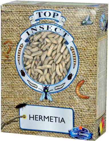 HERMETIA (ZWARTE SOLDATENVLIEG LARVEN)